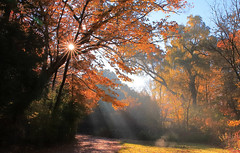 An autumn morning in the woods (Daniel Q Huang) Tags: