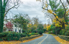 Autumn Roads (JMS2) Tags: road winding autumn fall foliage drive streets rye