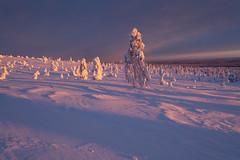 Pink Velvet (MrBlackSun) Tags: colours riisitunturi national park nikon d850 sunrise morningstar finland lapland antarctic