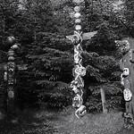 Dunnet Forest thumbnail