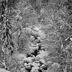 Winter Paradise - Tatzelwurm, Bavaria (W_von_S) Tags: winter winterlandschaft winterpanorama winterwonderland wintertime schnee snow snowlandscape snowscape snowshoehike schneelandschaft schneeschuhwanderung hike alpen alps mountains berge wald wood bach creek landschaft landscape paysage paesaggio panorama natur nature blackwhite sw schwarzweis monochrome monochrom wvons werner sony sonyilce7rm2 stitched tatzelwurm auerbach sudelfeld bavaria bayern germany deutschland outdoor januar january 2019 paradies paradise wasser water