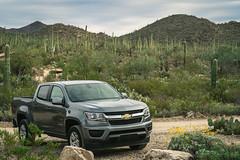 Tucson 018 (tyreedigital) Tags: tucson arizona southwest desert saguaro park outdoors mountains nature nationalpark cactus