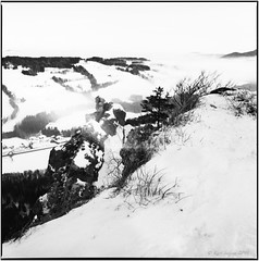 Winter on the Nockstein_Hasselblad (ksadjina) Tags: 6x6 austria carlzeissdistagon50mm fujiacros100 hasselblad500cm lichteinfallmagazin nikonsupercoolscan9000ed nockstein salzburg silverfast analog blackwhite film lightleak pushedtoasa400 scan snow winter