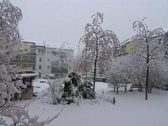 Winter hinterm Haus (Seesturm) Tags: 2019 seesturm winter autumn park schnee snow fenster blick blicke freital sachsen saxony deutschland germany