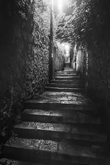 Dubrovnik, Croatia (pas le matin) Tags: road street rue ruelle alley travel voyage tree arbre walkway world city ville night nuit nb bw noiretblanc blackandwhite croatie croatia hrvatska perspective stairs escalier canon 7d canon7d canoneos7d eos7d europe europa streetlight lampadaire réverbère dark sombre