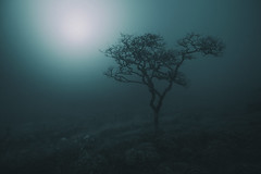 Moonlighting (www.neilburnell.com) Tags: night mood fog mist dartmoor landscape tree eerie moody atmosphere atmospheric ngc