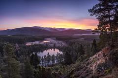 Pre Dawn Pinks (James Shooter) Tags: scotland cairngorms sunrise nature landscape woodland mountain