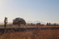 IMG_10423 (mudsharkalex) Tags: california byron byronca mountdiablo mtdiablo