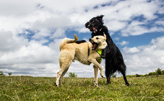 Fun Moments (Pan.Ioan) Tags: dog pets pet animal domestic mammal canine outdoors nature fun playing grass sky freedom