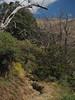 Spanien Andalusien Sierra Nevada Alpujarras @ Spain Andalusia © Andalucía La Alpujarra Granadina © (hn.) Tags: lanjaron senderocerecillomezquerina mezquerina spain europe andalusia andalucia spanien eu europa andalusien heiconeumeyer copyright copyrighted tp2018anda es sierranevada laalpujarra alpujarras provinciadegranada alpujarragranadina españa bewässerungskanal acequia kanal irrigation irrigationchannel