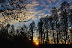 Az erdő közepén (Péter Vida) Tags: wood natural panorama sunset sky scenery