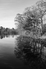 Woerd Avenue reflection (ewan.osullivan) Tags: bw river waltham charlesriver blackandwhite monochrome reflection trees