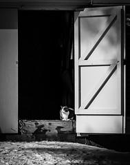 Cat In A Barn (Vic Zigmont) Tags: cat barn monochrome bw