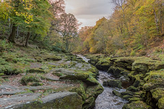 The Strid (Gareth Keevil) Tags: autumn boltonabbey colour garethkeevil landscape nikon nikond810 october river sunshine thestrid uk water wharf yorkshire zeiss28mmdistagon