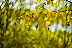 Autumn bokeh (Stefano Rugolo) Tags: stefanorugolo pentax k5 pentaxk5 helios44258mmf2 helios442 helios m42 autumnbokeh autumn bokeh depthoffield abstract leaves manualfocuslens manualfocus manual vintageprimelens vintagelens hälsingland sweden sverige