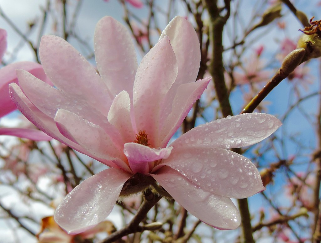 The World S Best Photos Of Fleur And Magnolia Flickr Hive Mind
