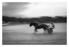 On the Beach ... (De l'autre côté du mirOir...) Tags: hippodrome•plestinlesgreves•saintefflam bretagne breizh brittany bzh fr france french nikon nikkor d810 nikond810 noiretblanc noirblanc nb blackwhite bw négroyblanco monochrome plage sable mer cheval filé courseshippiques
