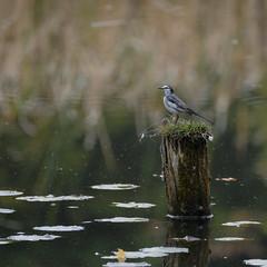 DSCF6573 (jojotaikoyaro) Tags: bird animal nature wildlife suginami tokyo japan fujifilm xh1 xf100400mm