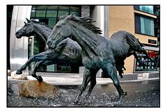 GOODMAN FIELD HORSES by HAMISH MACKIE (StockCarPete) Tags: horses statue water london hamishmackie