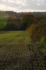 Footpath Off Rougham Hill (Martin Pettitt) Tags: 2018 autumn burystedmunds dslr nikond7100 november outdoor path roughamhill suffolk trees uk