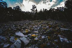 石瀑│黑森林│Taiwan (Nick_Ning_Huang) Tags: 台灣 雪山 黑森林 圈谷 石 樹 山 天 天空 雲 taiwan syue black forest rock tree sky cloud light sunlight sony ilce7rm3 ilce 7rm3 a7r3 camera fe1635mmf4zaoss fe 1635 za