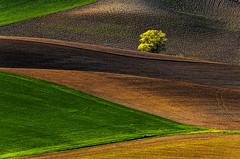 Turiec tuscany1