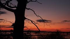 *** (pszcz9) Tags: przyroda nature natura naturaleza nationalpark parknarodowy ujściewarty drzewo tree zachódsłońca sunset woda water pejzaż landscape beautifulearth sony a77