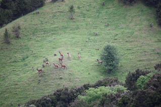 New Zealand Free Range Hunting - Marlborough 32
