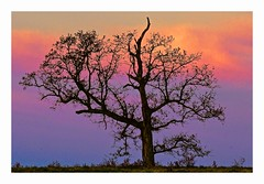 Early Morning, Dobbins Farm (George McHenry Photography) Tags: sunrise silhouette trees wintertrees southcarolina