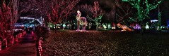 red cane walkway of lights (JoelDeluxe) Tags: rol riveroflights abq biopark nm december 2018 albuquerque biological park pnm light display colors lights sculptures fantasy newmexico hdr joeldeluxe