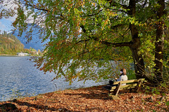 The Reader - or how to enjoy the beautiful autumn weather? (W_von_S) Tags: leserin reader herbst autumn lesen reading book buch baum trees bäume laub leaves see lake lakehechtsee hechtsee austria tyrol österreich tirol colorful farbig sonnig sunny wasser water ufer bench bank woman frau enjoy geniesen schön beautiful people menschen natur nature landschaft landscape wvons werner sony sonyilce7rm2 green grün rot red outdoor personen alps alpen berge mountains