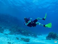 IMG_4384 (cdgobio) Tags: marrojo redsea 2018 sharkyolandareef