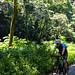 Road to hana by bike