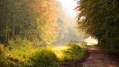 Autumn walk (Alex Verweij) Tags: autumn herfst wandelen walking color colors kleur coleur leaf leafs blad bladeren boom bomen tree trees marknesse waterloopbos alexverweij fujifilm xt20 light licht wandelaars brug zonlicht sunlight mist misty mistig