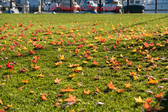 È autunno, cadono le foglie... (Stefano Procenzano) Tags: morat fr svizzera ch murten cantonfribourg d750 nikond750 nikon nikkor 28105mmf3545d nature lacdemorat murtensee