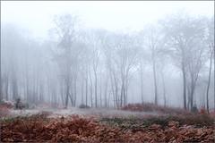 Mood (Eva Haertel) Tags: fog mist foggy misty forest woodland tree baum sky fern farn rot red eva haertel germany