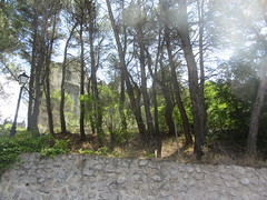 Ruins in the trees, across the gorge from Cuenca (d.kevan) Tags: ruins rocks plants trees undergrowth cuenca spain climbingplants streetlamps walls