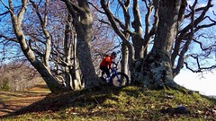 Love Those Trees (29in.CH) Tags: fall autumn fatbike ride 15112018 trees