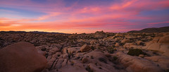 Sunset On Another Planet (Travis Rhoads) Tags: 2017 sonyilce7rm2a7rii canon24tsef35l ba72l bh55 rrspcl01 tvc33 reallyrightstuff desert landscapephotography nationalpark nikcollectionbygoogle sunset copyright2017 travisrhoadsphotography california joshuatreenationalpark monzogranite