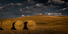 Musketeers of Harvest (Beppe Rijs) Tags: 2018 italien juli sommer toskana italy july summer tuscany
