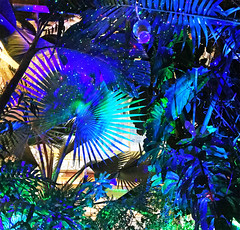 Conservatory of Flowers Night Bloom event lights display abstract (Aqua and Coral Imagery) Tags: conservatory flowers indoors inside trees plants nature night lights colors colorful sparkle vibrant tree leaves magic