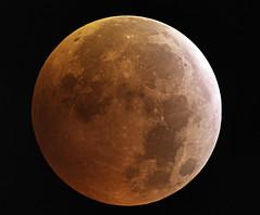 Max_Eclipse_21_01_2019_06_12 (danwery) Tags: moon eclipse astro astrophoto night dark luna eclissi milano astronomy canon celestron telescope