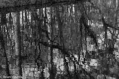 IMGP9336 (Brian H Whittle) Tags: blackwhite leedsliverpoolcanal rufford canal