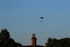 2018_09_02_0396 (EJ Bergin) Tags: landscape westsussex sussex wisboroughgreen balloonfestival wisboroughgreencharityballoonfestival balloon balloons parachute hotairballoon