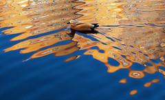 In Wonderland (VIIIIVIIIIX) Tags: wonderland art colors abstract reflex blue orange duck amazing wow hypnotize canon 5dmiii 100l