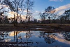 Reflection in the lake (jan.vd.wolf) Tags: landgoedappel landschap voorthuizen nijkerk gelderland nederland nl reflection lake weerspiegeling bomen tree water nature natuur zonsondergang sunset landscape bos forest wald