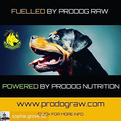 Reposted from @sophie.grove.52 - My dogs are very lucky to be #poweredbyprodograw #prodograwuk #prodograwpuppy #prodognutrition excellent food with the benefits easy see - beautiful pearly whites, great muscle development and glossy coats. Couldn't ask fo (RetrosheepCharms) Tags: reposted from sophiegrove52 my dogs very lucky be poweredbyprodograw prodograwuk prodograwpuppy prodognutrition excellent food with benefits easy see beautiful pearly whites great muscle development glossy coats couldnt ask for anything morei love it shared by retrosheep handmade personalised gifts ebay etsy amazonhandmade amazon share follow loveit comment photography visit our store retrosheepcom