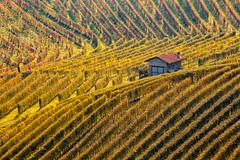 . (bluestardrop - Andrea Mucelli) Tags: langhe barolo piemonte piedmont viti vines vineyard autunno autumn fall