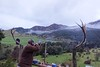 New Zealand Free Range Hunting - Marlborough 56