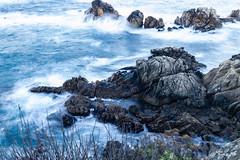 Point Lobos, December 2018 #7 (satoshikom) Tags: canoneos6dmarkii pointlobosstatenaturalreserve carmelbythesea carmel californiastateparks californiacoast canonef1635mmf28liiusm